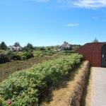Sylt: Einzelhaus unter Reet in unmittelbarer Strandnähe auf traumhaftem Heidegrundstück